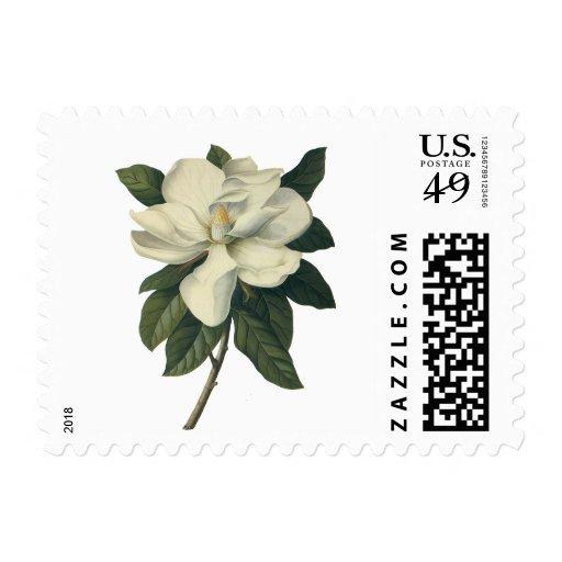 Vintage Flowers, Blooming White Magnolia Blossom Postage