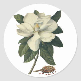 Vintage Flowers, Blooming White Magnolia Blossom Classic Round Sticker