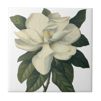Vintage Flowers, Blooming White Magnolia Blossom Ceramic Tiles