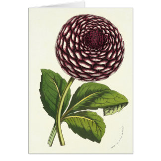 Vintage Flowers Dahlia by Louis Benoit van Houtte Card