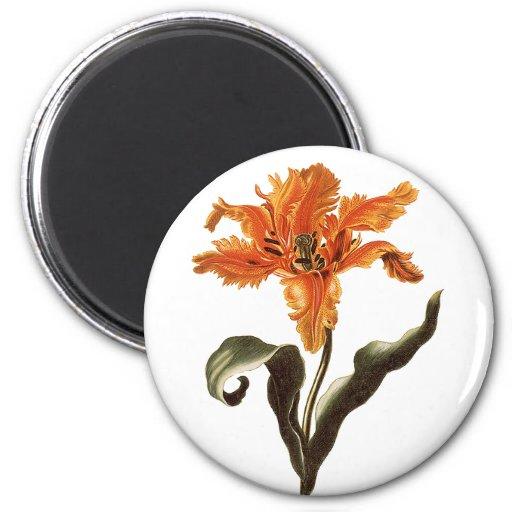 Vintage Flowers, Fancy Frilly Orange Lily in Bloom Fridge Magnets