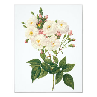 Vintage Flowers Floral Blush Noisette Rose Redoute Card