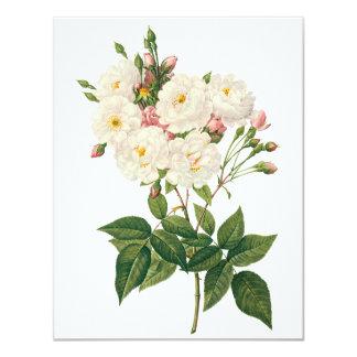 Vintage Flowers Floral Blush Noisette Rose Redoute Card