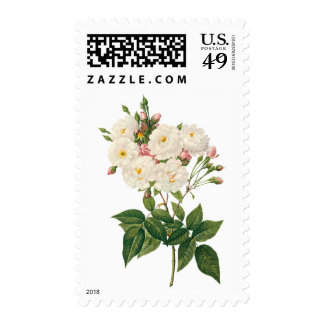 Vintage Flowers Floral Blush Noisette Rose Redoute Postage
