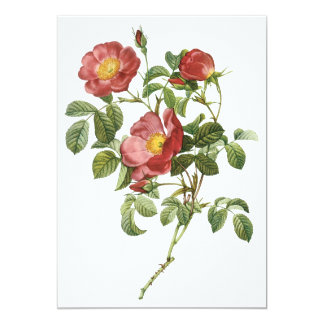 Vintage Flowers Floral Red Rose of Love by Redoute Card