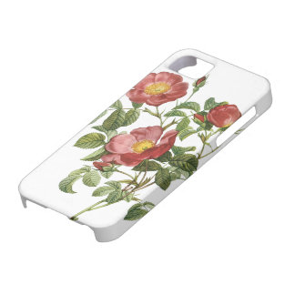 Vintage Flowers Floral Red Rose of Love by Redoute iPhone 5 Case