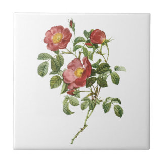 Vintage Flowers Floral Red Rose of Love by Redoute Ceramic Tile