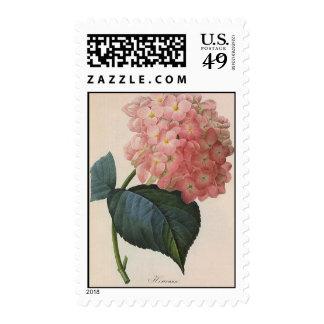 Vintage Flowers Pink Hydrangea Hortensia Garden Postage Stamp