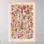 Vintage   Flowers  poster 1920