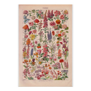 flower posters flower prints flower wall art