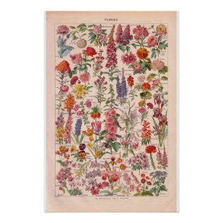 Vintage   Flowers  Poster 1920 at Zazzle