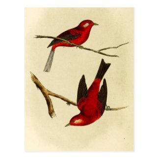 Vintage Flycatcher Bird Post Card