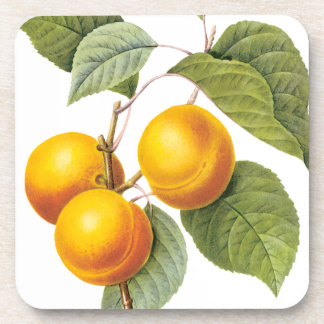 Vintage Food Fruit, Apricot Peach by Redoute Beverage Coaster