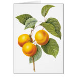 Vintage Food Fruit, Apricot Peach by Redoute Greeting Cards