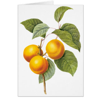Vintage Food Fruit, Apricot Peach by Redoute Card