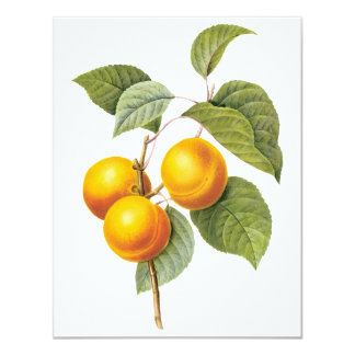 Vintage Food Fruit, Apricot Peach by Redoute 4.25x5.5 Paper Invitation Card