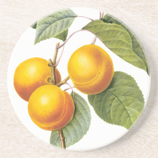 Vintage Food Fruit, Apricot Peach by Redoute Sandstone Coaster