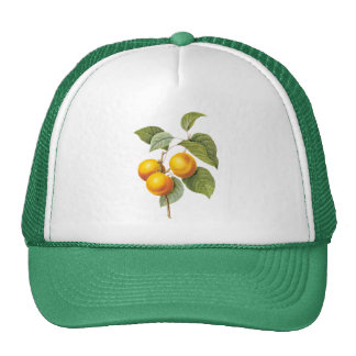 Vintage Food Fruit, Apricot Peach by Redoute Trucker Hat