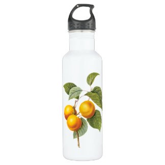 Vintage Food Fruit, Apricot Peach by Redoute Water Bottle
