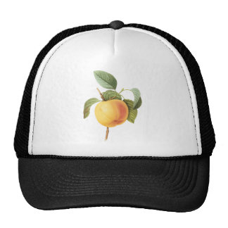 Vintage Food Fruit, Calville Apple by Redoute Hat