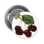 Vintage Food Fruit, Cherries on a Branch Pinback Buttons
