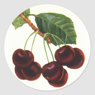 Vintage Food Fruit, Cherries on a Branch Sticker