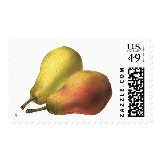 Vintage Food Fruit Organic Ripe Pears Postage
