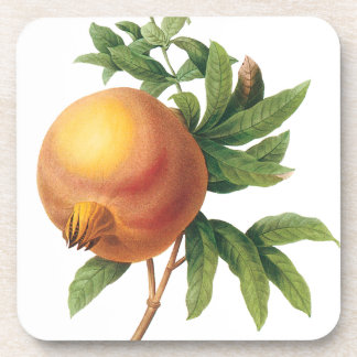 Vintage Food Fruit, Pomegranate by Redoute Beverage Coaster