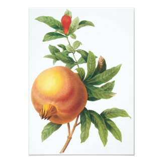 Vintage Food Fruit, Pomegranate by Redoute Card