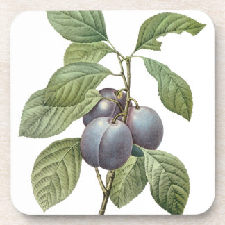Vintage Food Fruit, Purple Garden Plums by Redoute Beverage Coaster