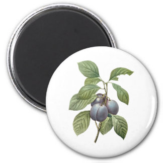 Vintage Food Fruit, Purple Garden Plums by Redoute Magnet