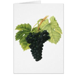 Vintage Food Fruit, Red Wine Organic Grape Cluster Greeting Card