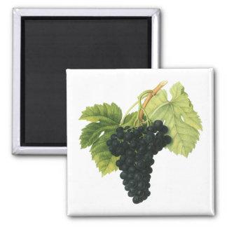 Vintage Food Fruit, Red Wine Organic Grape Cluster 2 Inch Square Magnet