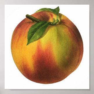 Vintage Food Fruit, Ripe Organic Peach with Leaf Poster
