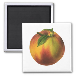 Vintage Food Fruit, Round Ripe Peach with Leaf 2 Inch Square Magnet