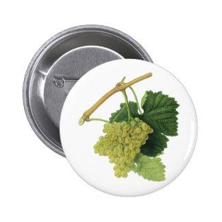 Vintage Food Fruit, White Wine Grapes on the Vine Pinback Button