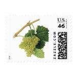 Vintage Food Fruit, White Wine Grapes on the Vine Stamp