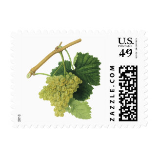 Vintage Food Fruit, White Wine Grapes on the Vine Stamp