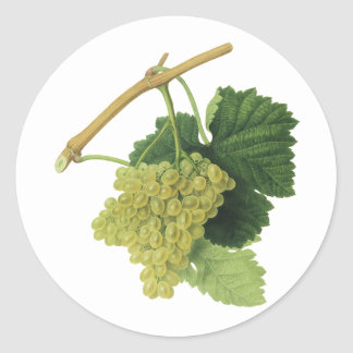 Vintage Food Fruit, White Wine Grapes on the Vine Classic Round Sticker