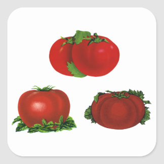 Vintage Food, Fruits, Vegetables, Red Ripe Tomato Square Sticker