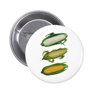 Vintage Food Healthy Vegetables, Fresh Corn on Cob Button