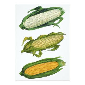 Vintage Food Healthy Vegetables, Fresh Corn on Cob Card