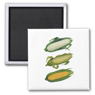 Vintage Food Healthy Vegetables, Fresh Corn on Cob Magnet