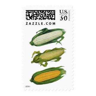 Vintage Food Healthy Vegetables, Fresh Corn on Cob Postage