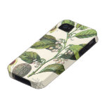 Vintage Food Herbs Spice, Nutmeg Plant Fruit Seeds Case-Mate iPhone 4 Cases