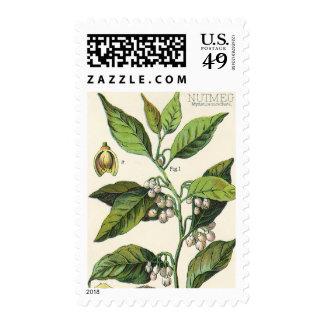 Vintage Food Herbs Spice, Nutmeg Plant Fruit Seeds Postage