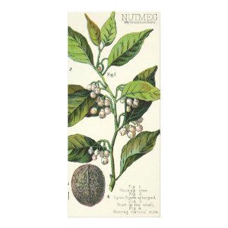 Vintage Food Herbs Spice, Nutmeg Plant Fruit Seeds Custom Rack Cards