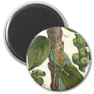 Vintage Food Herbs Spices, Black Pepper Plant 2 Inch Round Magnet