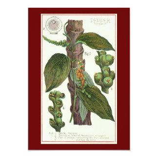 "Vintage Food Herbs Spices, Black Pepper Plant 5"" X 7"" Invitation Card"
