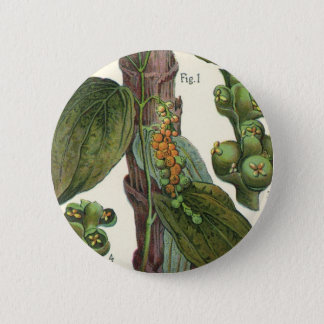 Vintage Food Herbs Spices, Black Pepper Plant Pinback Button